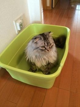猫トイレ1.jpg