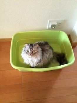猫トイレ2.jpg
